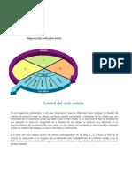 biologia_2_medio_UNIDAD_1_LECCION_3_Importancia_de_regular_la_mitosis