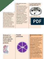 anatomia1.docx