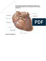 Guía patocardio 4-12-2019