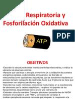 CTE y fosforilación oxidativa-2019-2
