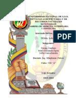 Informe internado.docx