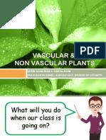 VASCULAR AND NON VASCULAR PLANTS