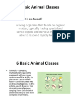 6 Basic Animal Classes.pptx