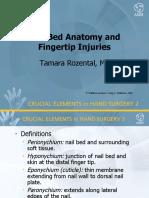 Nail Bed Anatomy and Injuries