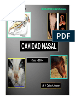 128145201-Cavidad-Nasal.pdf
