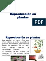 05 Reproducción en plantas.pptx