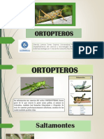 ORTOPTEROS.pptx