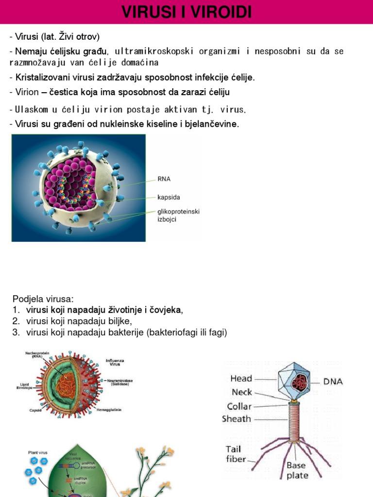 virusi koji napadaju bakterije