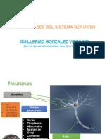 GENERALIDADES DEL SISTEMA NERVIOSO CENTRAL.pptx