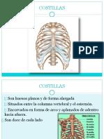 anatomia costillas
