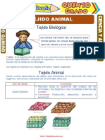 TEJIDO ANIMAL
