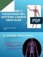 Circulatorio