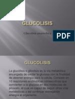 Glucolisis anaerobica