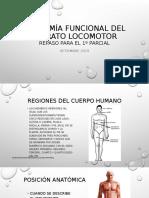 repaso 1º parcial  Anatomía funcional del aparato locomotor