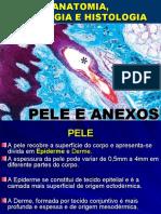 Aula Pele & Anexos Medicina
