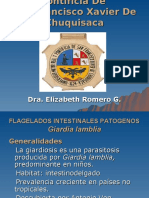 LECC 12-13 FLAGELADOS INTESTINALES NO PATOGENOS- PATOGENOS- DE CAV..ppt