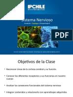 Sistema Nervioso  nnn