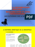 Revision_DROSPHILES_SABINE.ppt