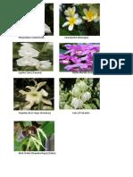 flores nacionales de los paises de centroamerica