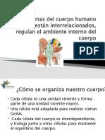 pt_Interrelacion_de_los_sistemas.ppsx