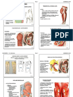 Anatomia 2 - LOCOMOTOR Inferior - USA 2019 ALU