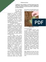 a2_artigo_o_rebentar_das_cinzas
