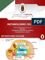 CLASE VIII. METABOLISMO CELULAR.ppt