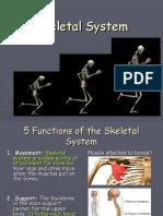 Skeletal_System.ppt