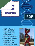 howDNAworks