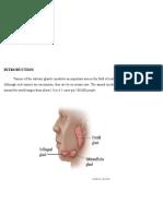 Histogenesis of salivary gland Neoplasms