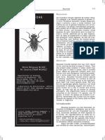 2008 - Nihei, Domínguez - Muscidae.pdf