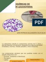 tcnicascitoqumicasdeidentificacinleucocitaria-170404001926