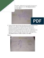 434866336-entomologia-de-los-insectos.docx