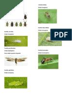 entomologia parcial