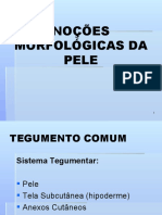 PELE ANATOMIA