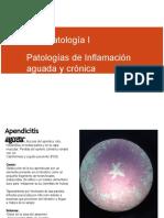 Patologia Inflamación y reparación