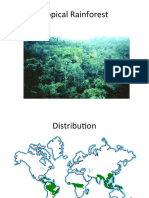 Tropical rainforest.ppt