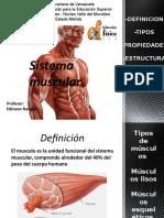 diapositivas del sistema muscular
