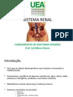 SISTEMA RENAL.ppt