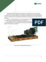 Sucessão ecológica.pdf