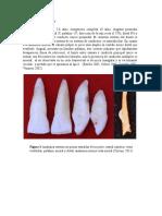 dientes.docx
