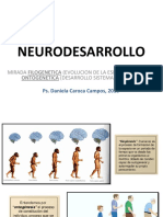 TEMA 3 NEURODESARROLLO FILO Y ONTOGENESIS