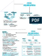 Ciclo Orçamentário.pdf