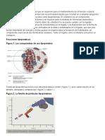 Fundamentos lipídicos ARTICULO 1