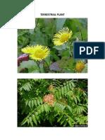 TERRESTRIAL PLANT.docx
