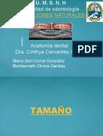 Exposicion anatomia dental.pptx
