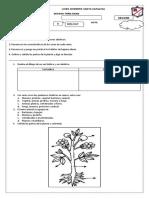 evaluaciones segundo período