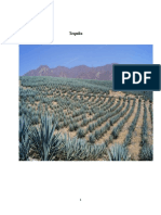 tequila project.docx