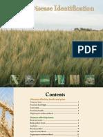Wheat Disease Identification