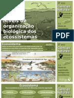 CN8_Niveis_organizacao_biologica_ecossistemas.pdf